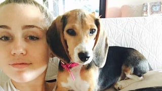 Miley Cyrus Welcomes New Dog to Family, Spends July 4th Weekend With Liam Hemsworth