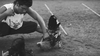 Dead Cross Take Brutal Look at Cockfighting in 'Obedience School' Video