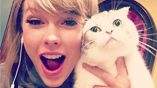 Celebrities Obsessed With Their Cats