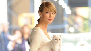 Taylor Swift's Cats Meredith and Olivia Are Just Like Us! Watch