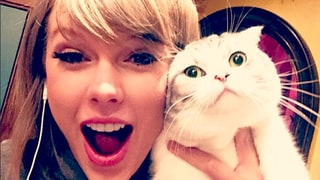 Taylor Swift's Cat Meredith Is the Ultimate Grumpy Cat at a Party