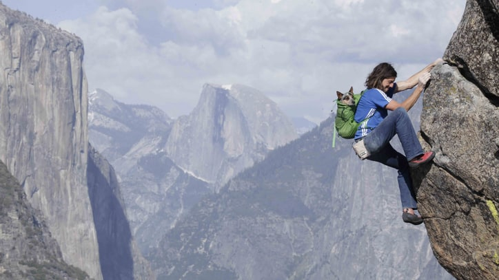 Canine Sidekicks: The Most Famous Adventure Dogs in America