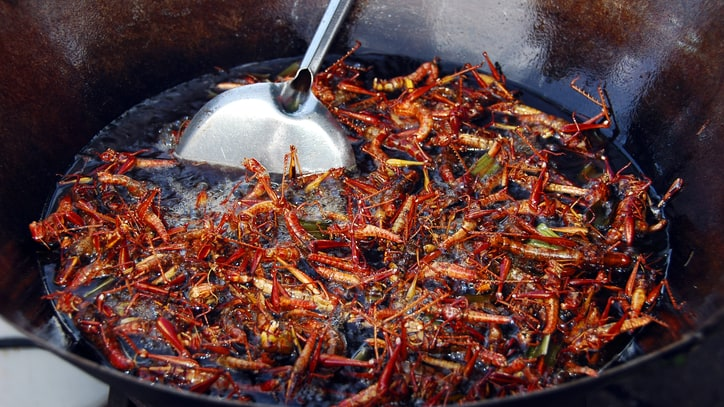 Why You Should Be Eating Insects