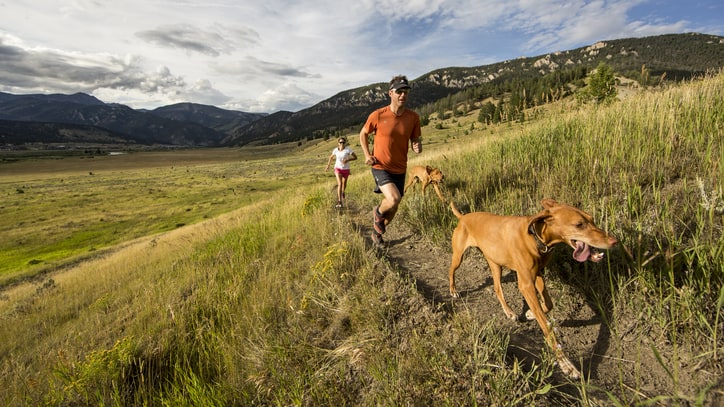 Canine Competitions: 23 Races to Run With Your Dog