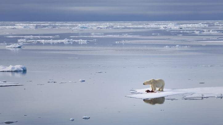 Arctic Explorers Face an Unusual Challenge: A Lack of Ice at the North Pole