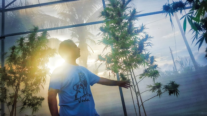 Meet the Mogul Bringing Great Weed Back to Jamaica