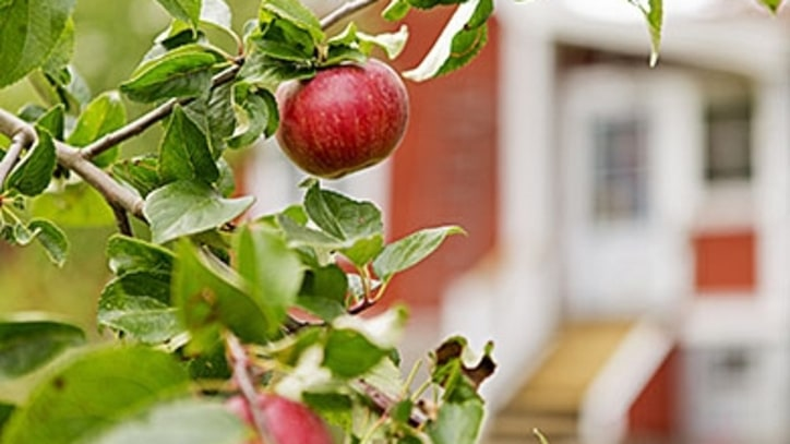 How to Grow an Apple Orchard