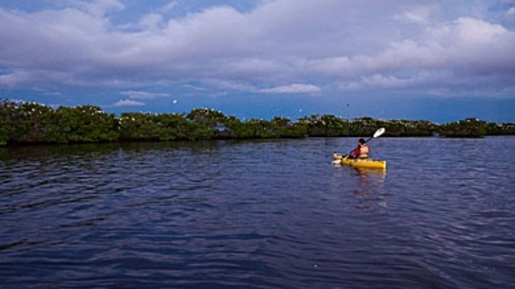 Enter the Everglades Island Labyrinth