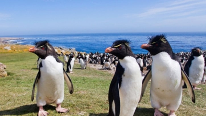 A Flock to the Falklands