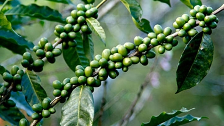 The Truth About Green Coffee Bean Supplements
