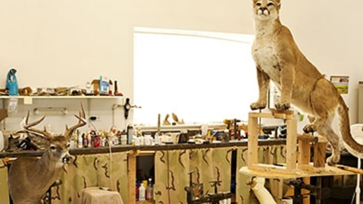 How to Buy Taxidermy