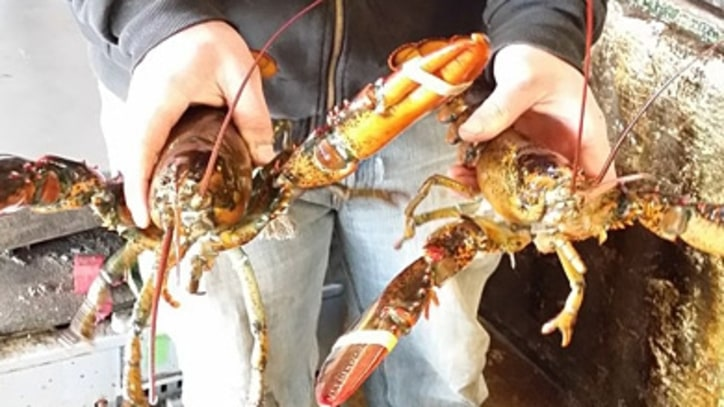 A Maine Lobster's Journey to California