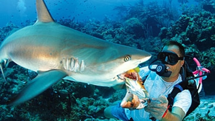No-Cage Shark Diving