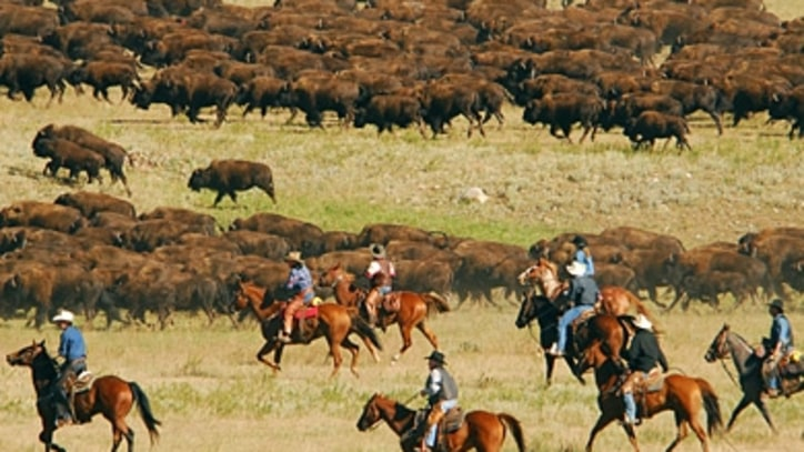 The Running of the Buffalo