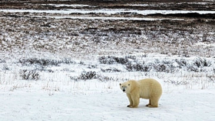 Seeing (and Saving) Polar Bears in the Wild