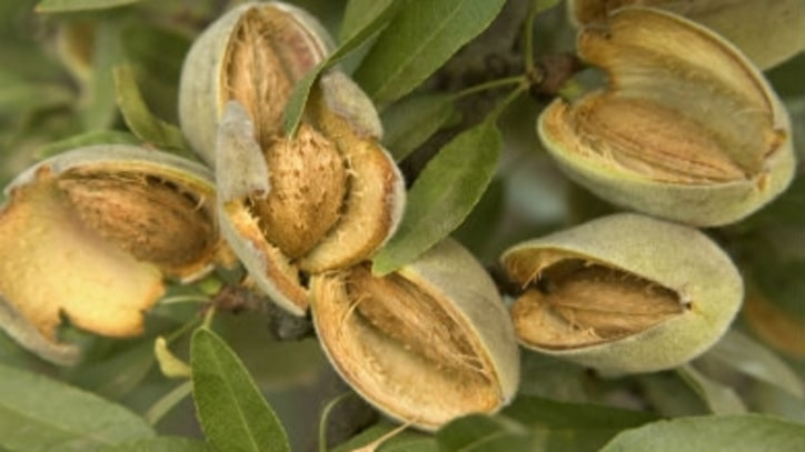 Should We All Stop Eating Almonds?
