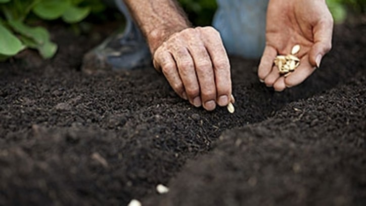 How to Start Your Vegetable Garden, Now