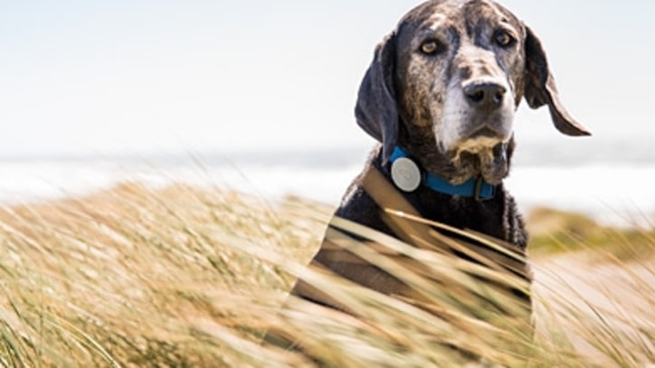 The Activity Tracker for Dogs