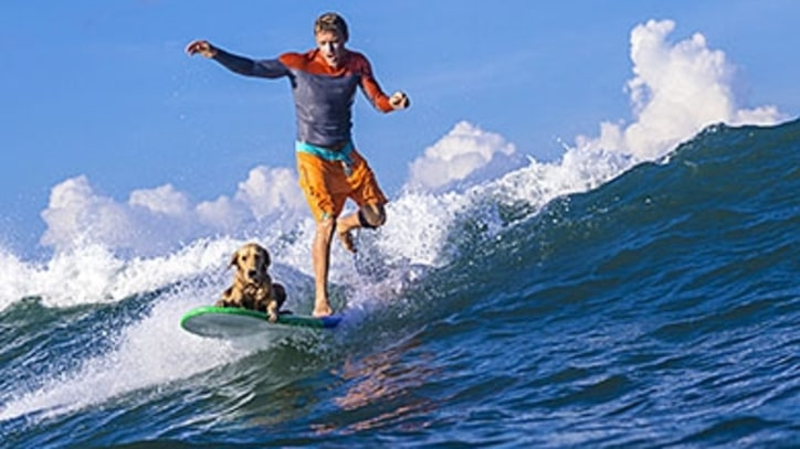 How to Surf With Your Dog