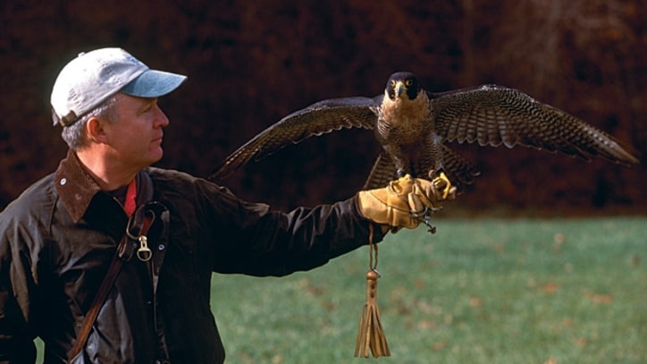 Take up Falconry in West Virginia.