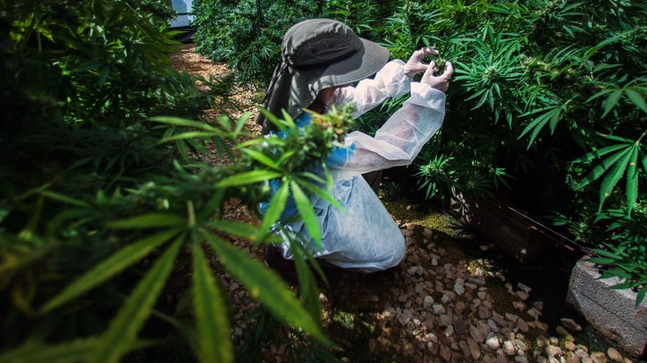 How the Booming Israeli Weed Industry Is Changing American Pot