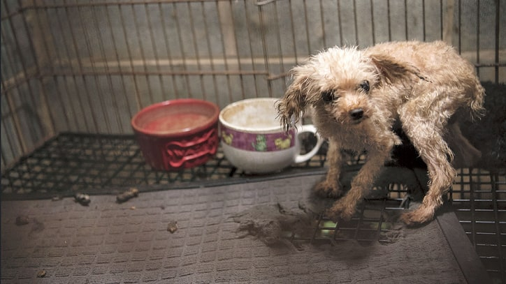 Becoming a Dog: What Happens After the Puppy Mill?