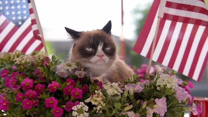 Grumpy Cat and Other Celebrity Felines Star in 'Cat Summer' Video