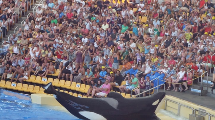 SeaWorld Condemns 'Blackfish' Documentary's Critical Take on Captivity
