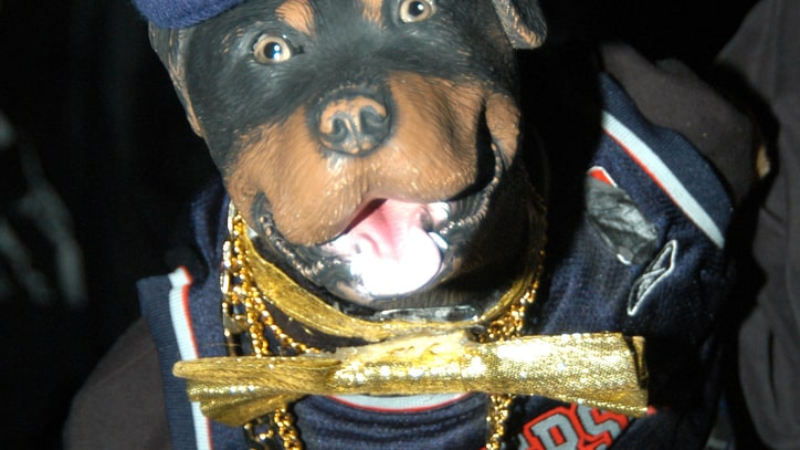 Triumph the Insult Comic Dog to Star in New Show, Poop on Things