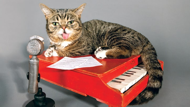 Lil Bub Recruits Thurston Moore, Surfer Blood for LGBT Rights Indiana Comp