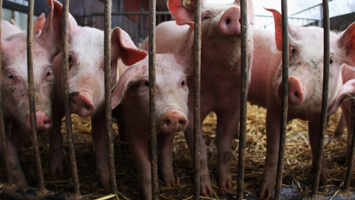 Boss Hog: The Dark Side of America's Top Pork Producer