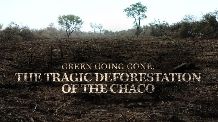 Green Going Gone: The Tragic Deforestation of the Chaco