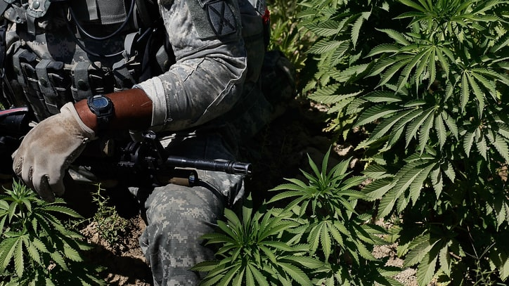 Senate Greenlights Greater Medical Weed Access for Veterans