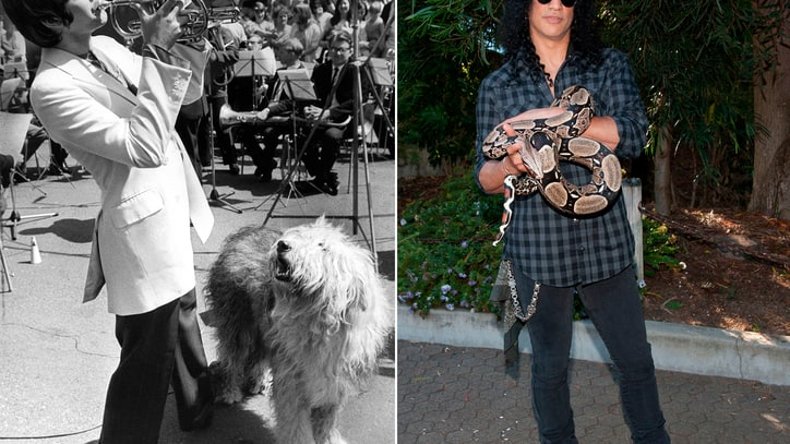 Wild Things: 11 Pets That Influenced Rock and Pop