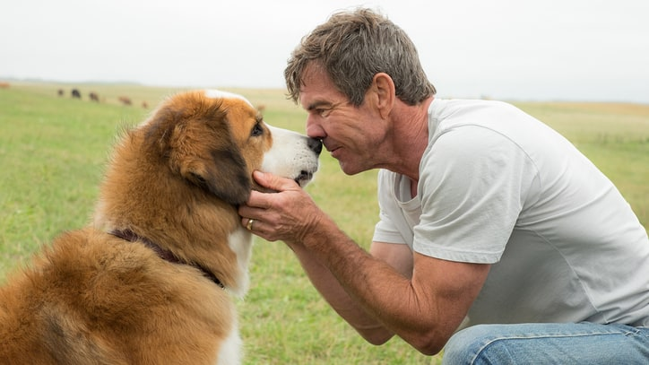 'A Dog's Purpose' Review: This Sappy Canine Drama Should Be Put to Sleep
