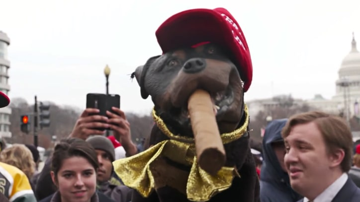 Watch Triumph the Insult Comic Dog Scorch Trump's Inauguration