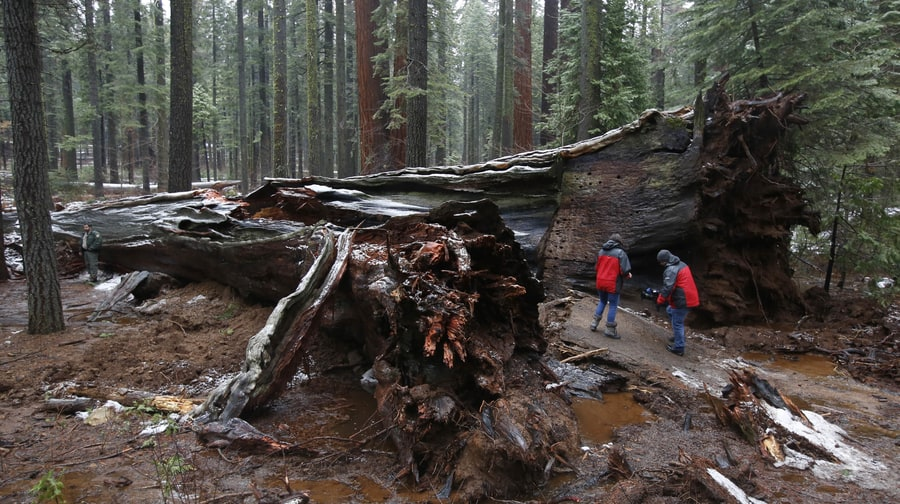 R.I.P. Tree Tunnel: Plus Six More Natural Structures Wiped Out By Mother Nature