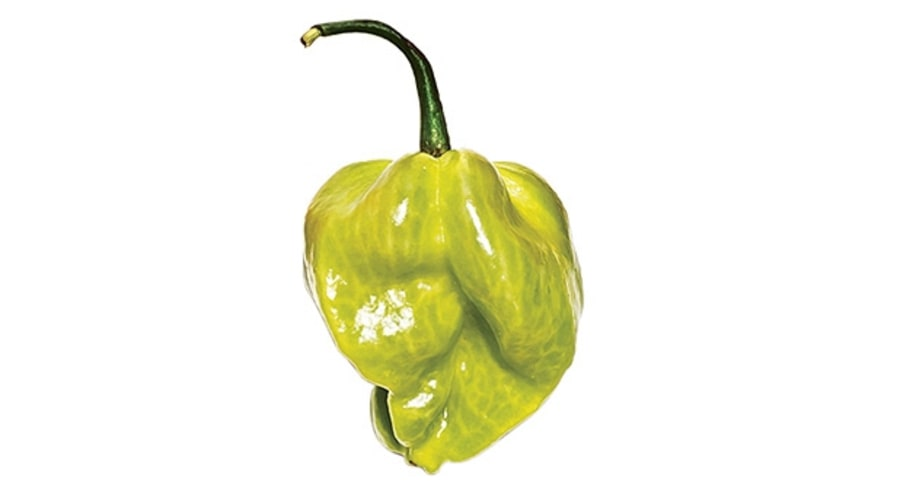 Scotch bonnet (superhot)