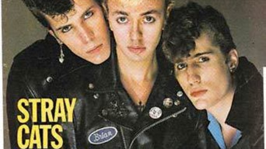 Stray Cats Photos