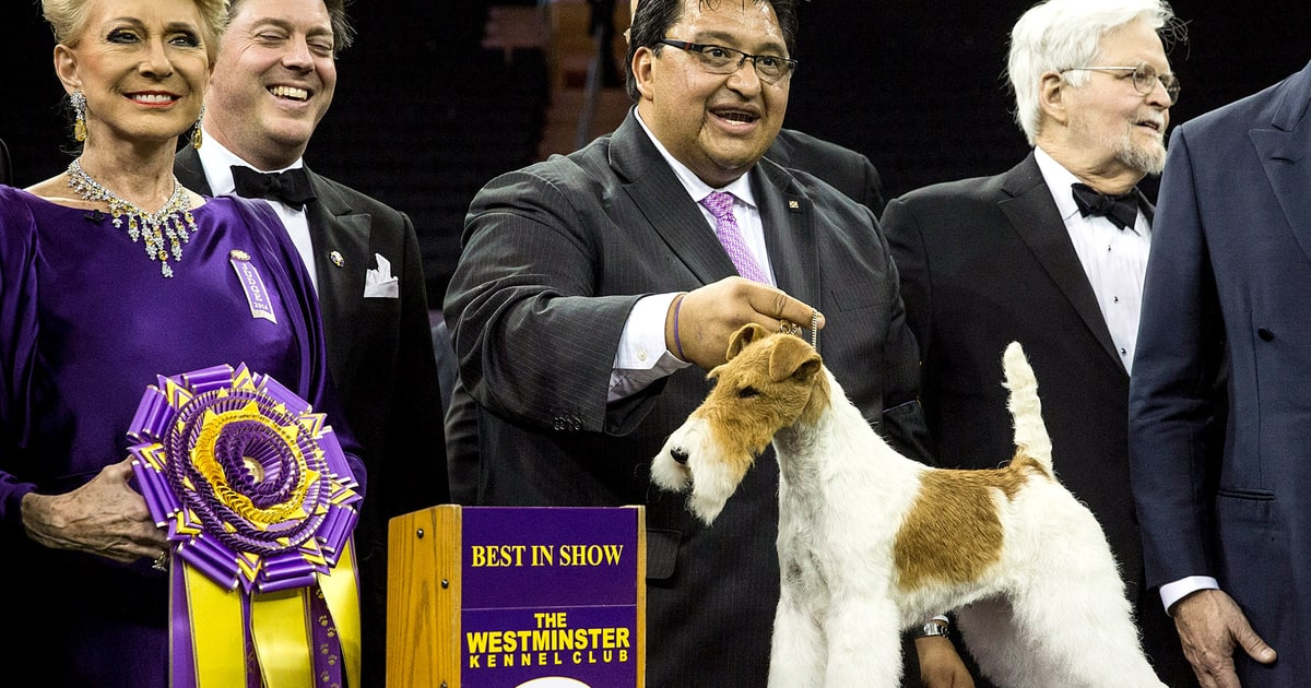 westminster dog show 2014 winner is wire fox terrier named sky  pic
