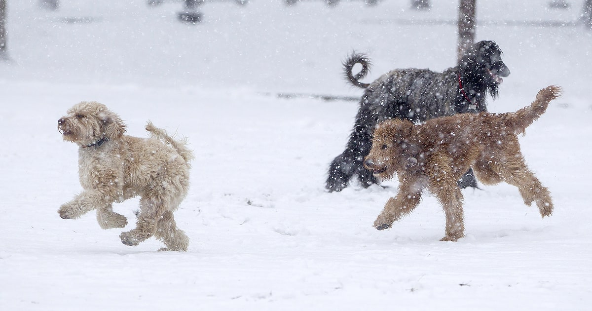 These Dogs Are Having the Best Time in Winter Storm Stella