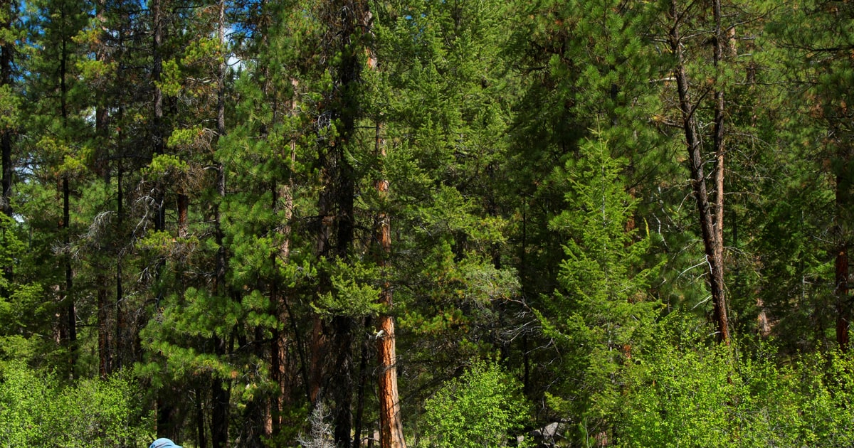 Public Land For Sale! Here Are Some of the 3.3 Million ...