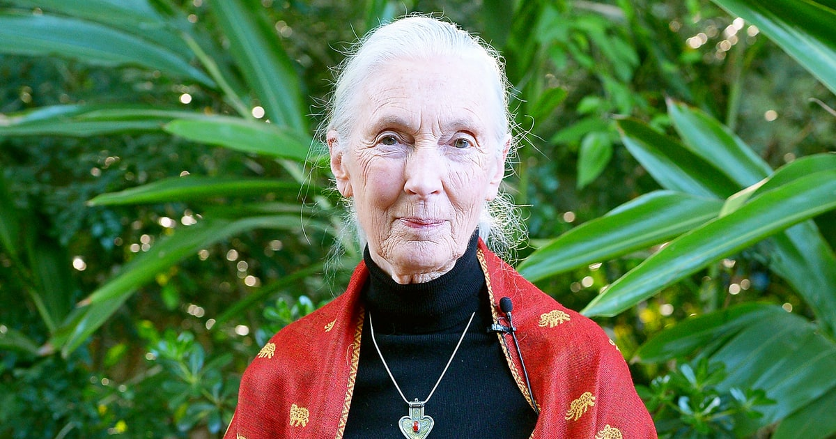 Jane Goodall: Gorilla Put Arm Around Child Before He Was ...