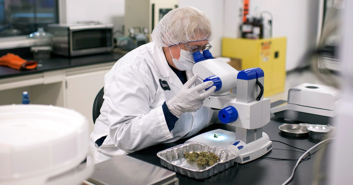 Why Medical Marijuana Research Is Gaining Support From the GOP