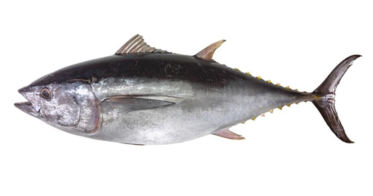 U s atlantic yellowfin tuna the five safest fish to eat for Ahi tuna fish
