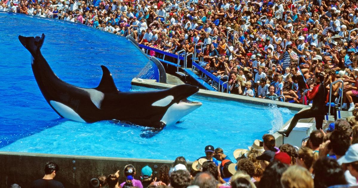 Pink, SeaWorld Battle Over Killer Whale Captivity