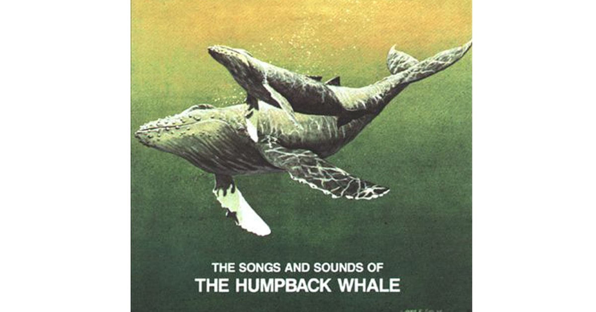 song of the whale Founded in 2016 by laura thornton, sarah richardson and ian gilmore, whale song theatre is an emerging professional theatre company in halifax, nova scotia.