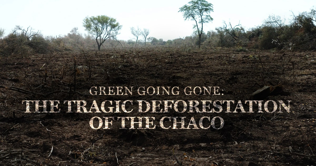 the tragic deforestation of the chaco rolling stone