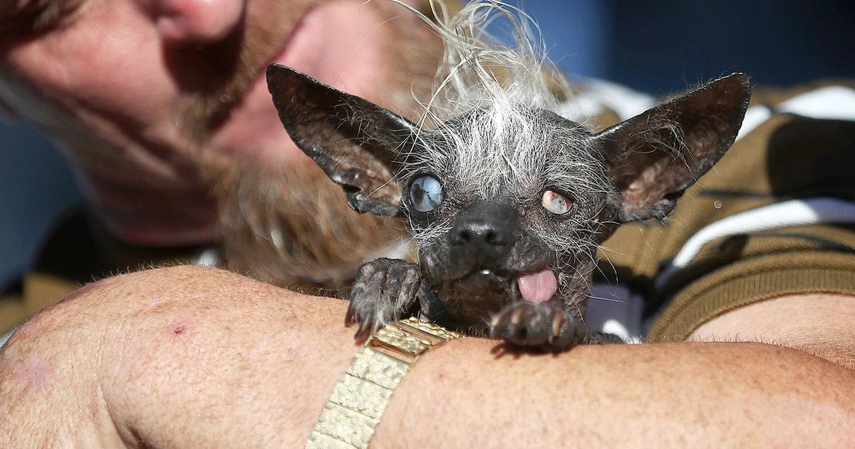Best Dog Photo Contest