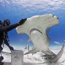 4 Shark Encounters That Show Them as Gentle Giants